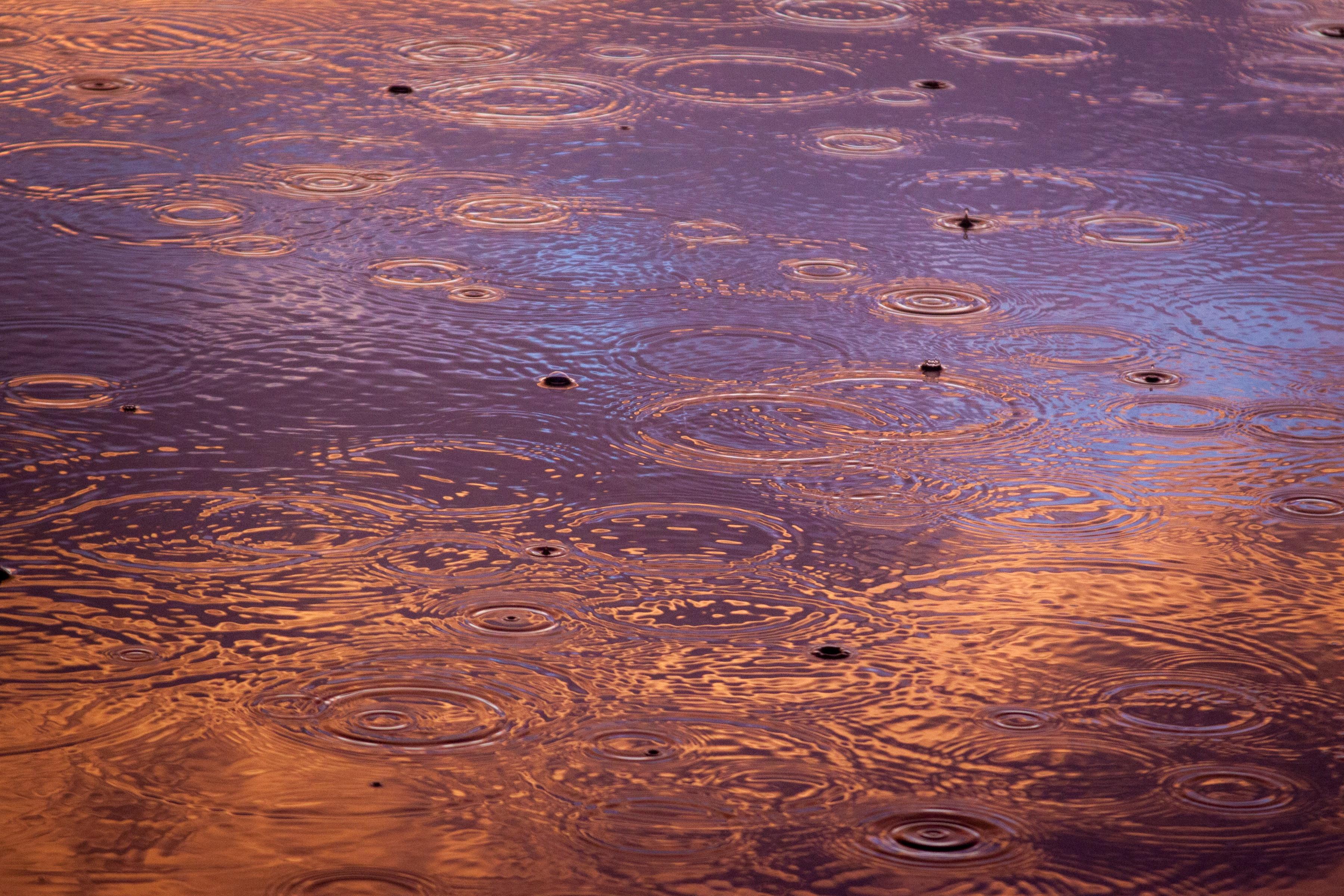 所作 マナー 気づき 雨 恵み 水